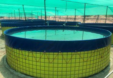 Biofloc Fish Farming