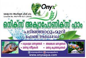 Onyx Aqua farm - Aquaponics fish farming in Kerala