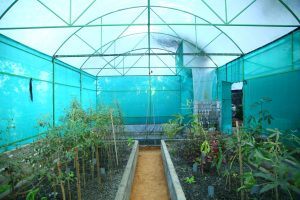 Aquaponics Unit with Fish Pond and Grow bed under a Rain Shelter