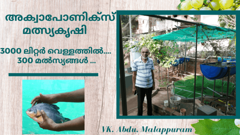 Aquaponics Fish Farming at Malappuram in Malayalam