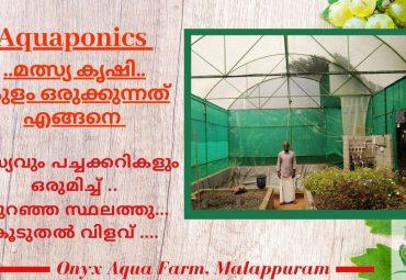 Setup a Fish pond in Aquaponics Fish farming