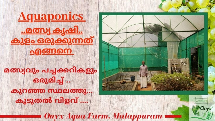 Setup a Fish pond in Aquaponics Fish farming