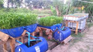 Barrel Grow bed for Aquaponics Fish farming