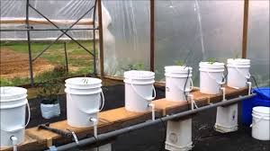 Bucket Grow bed for Aquaponics Fish farming