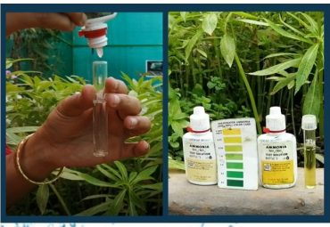 Ammonia Test in Water of Fish Pond