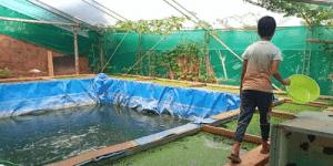 Fish and Azolla culture in Onyx aqua farm