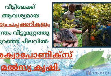 Aquaponics Fish farm of an Ex-NRI