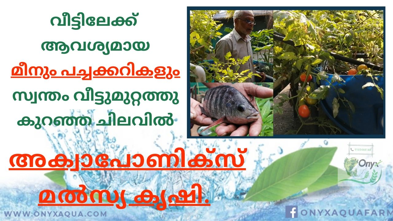 Aquaponics Fish farm of an Ex-NRI