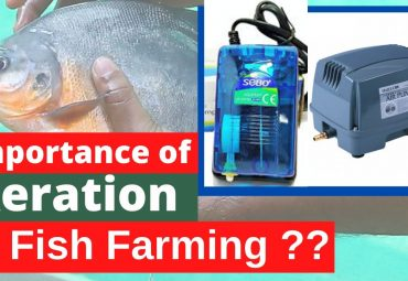 Importance of Aeration in Fish farming