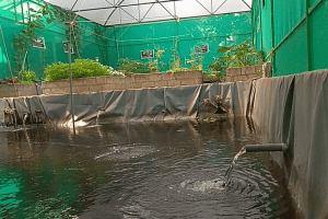 Onyx Aquaponics Farm in Kerala