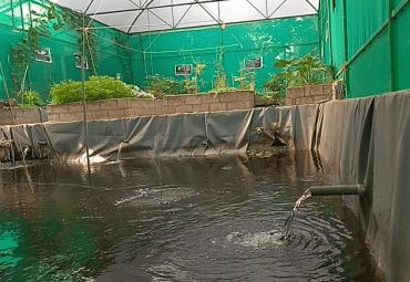 Aquaponics fish farm in Kerala