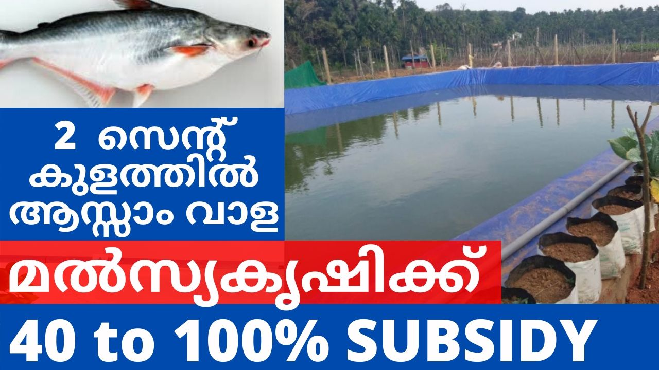 Subsidy for Fish Farming in Kerala