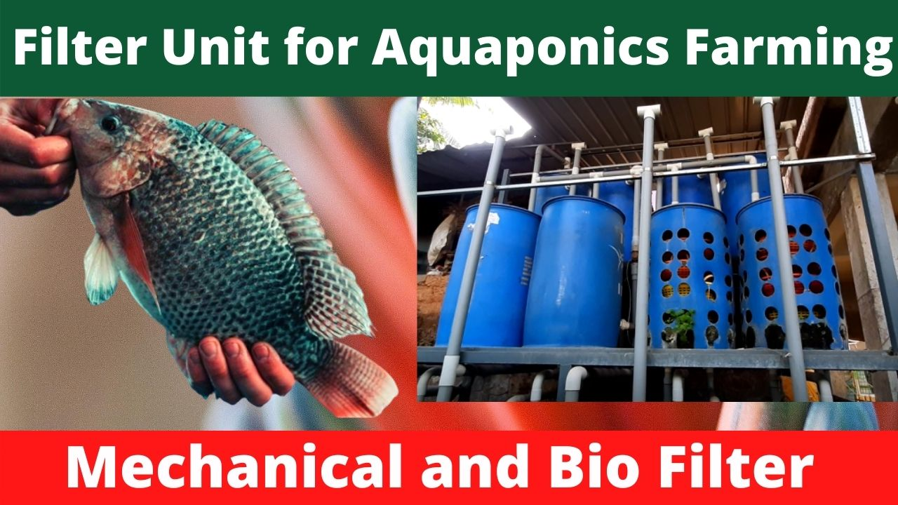 How to Setup a Filter Unit for Aquaponics Fish Farming