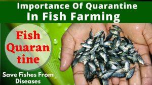 Importance of quarantine in Fish Farming