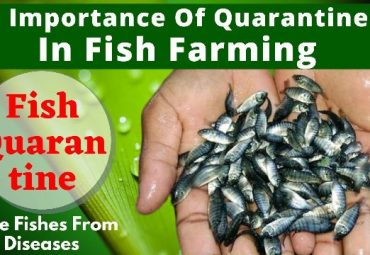 How to Quarantine Fish in 2 Minutes