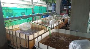 Nursery pond for baby fishes in Onyx aqua farm