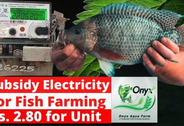 Subsidy Electricity for Fish Farming in Kerala