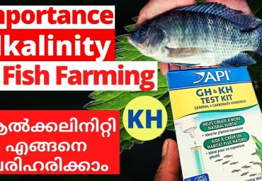 Importance of Alkalinity in Aquaculture