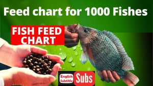 Feed Chart for 1000 fishes in fish farming