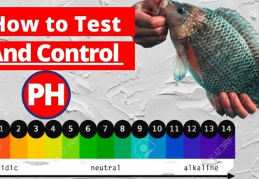 How to Test and Control the PH level in Fish Tank