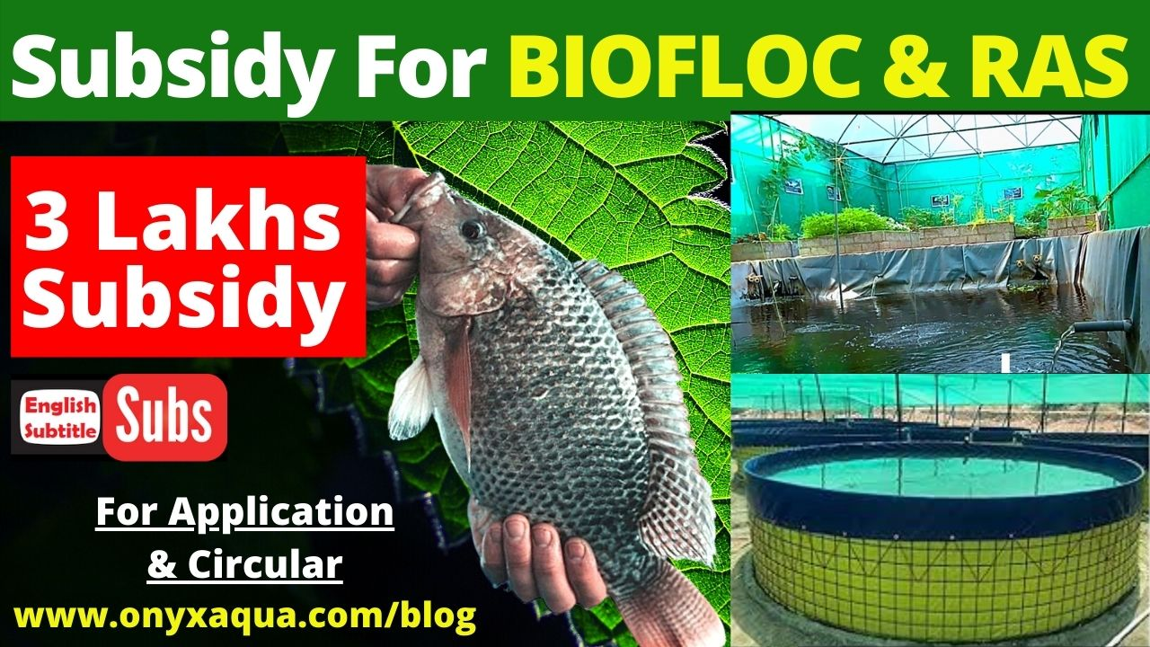 PMMSY Subsidy For Biofloc and RAS Fish Farming
