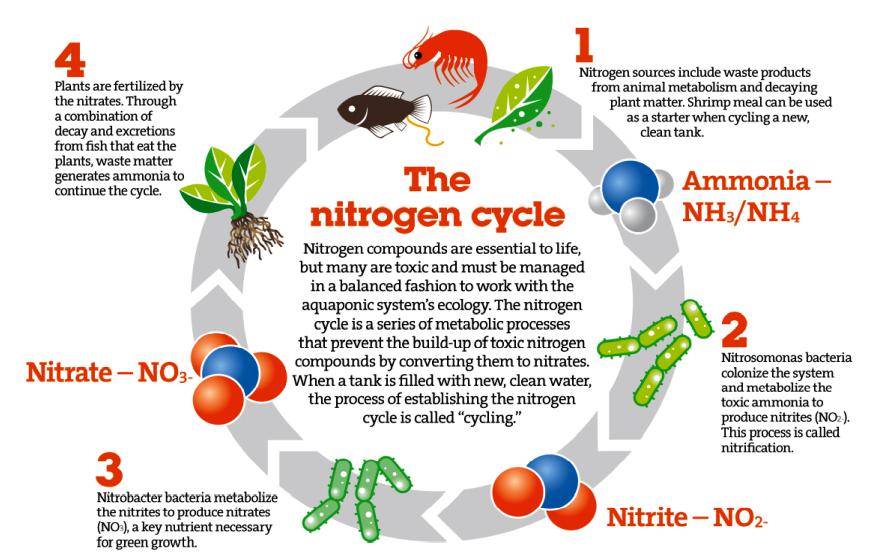 Nitrogen cycle chart