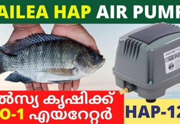 Best Air pump for Fish Farming Hailea HAP 120