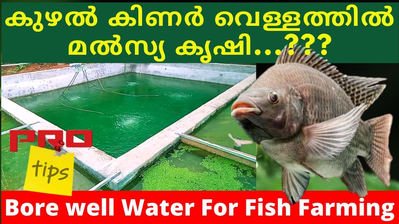 Bore well water for Fish Farming